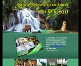 Rain Forest Childrens Book