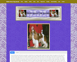 Cavalier King Charles Spaniels For Sale In Oklahoma