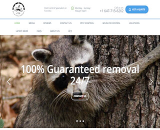 Raccoon Removal Newmarket